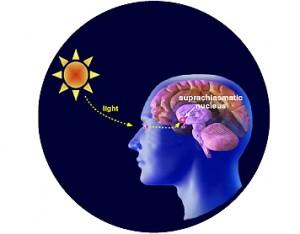 efectos-melatonina