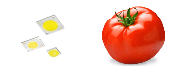 LED_cultivo_tomate_metal_luz