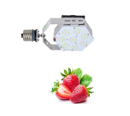 proyector_LED_meta_luz_120w_fresas